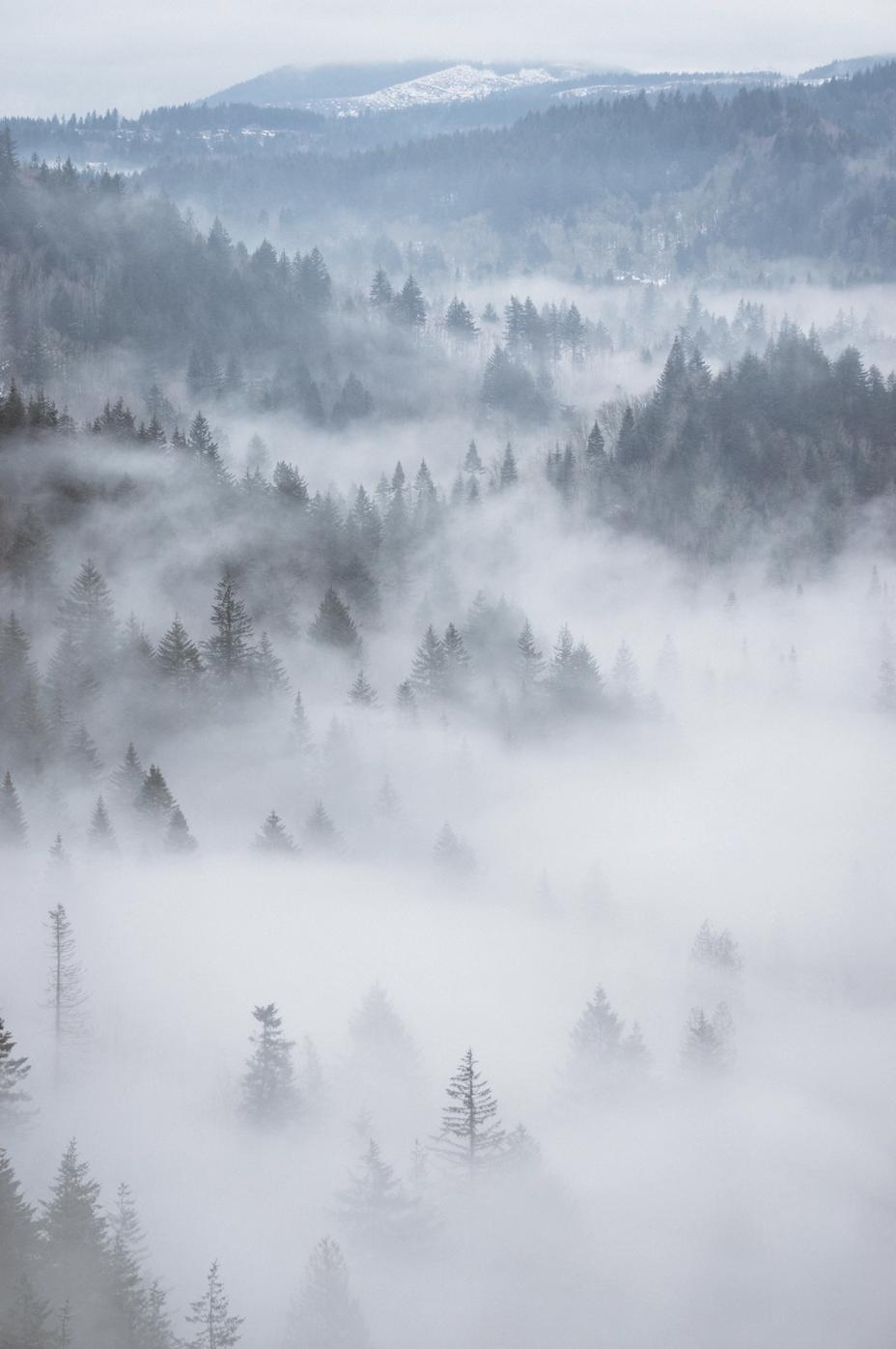Nebel im November